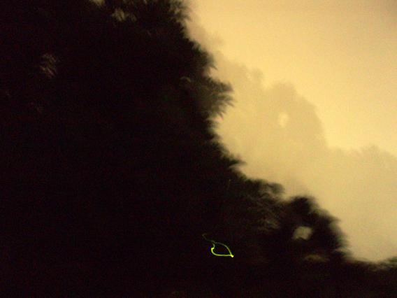 下の方の光が蛍の光です。