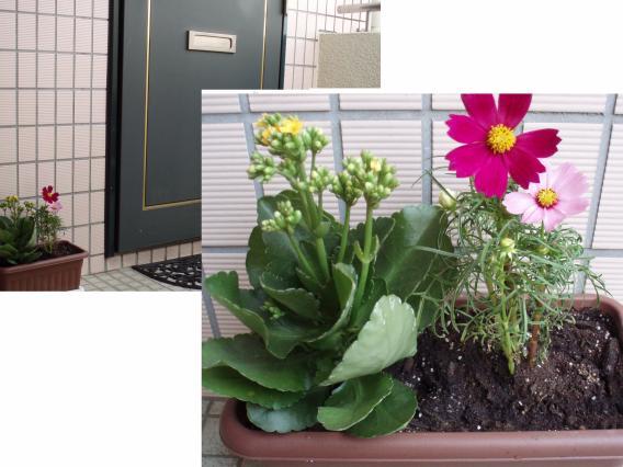 201309玄関花