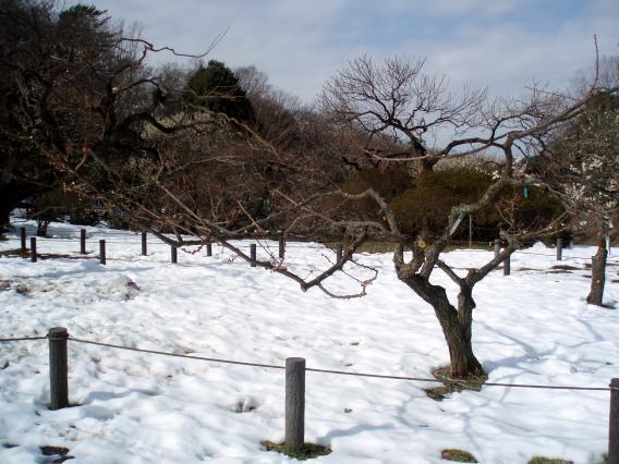 大倉山梅林公園09