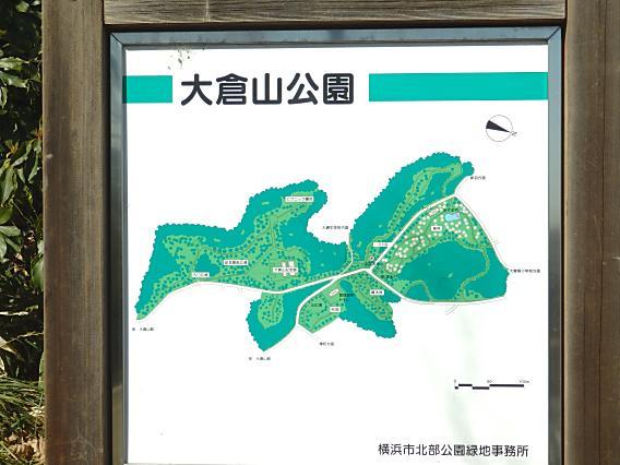 大倉山公園梅林20170207 (7)