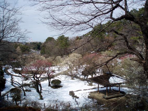 大倉山梅林公園