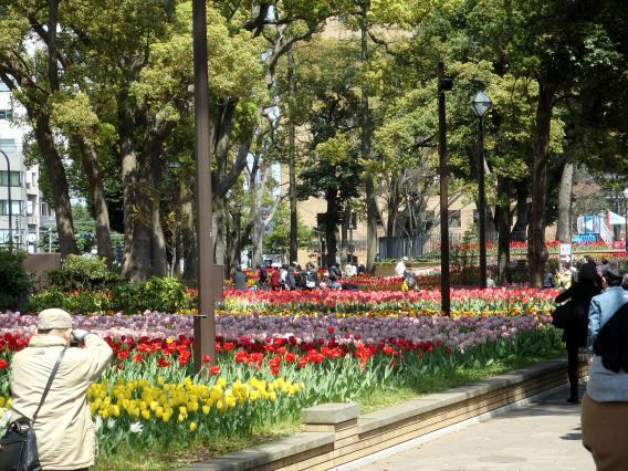 横浜公園チューリップ20160412 (24)