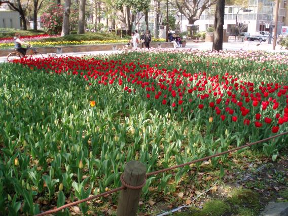 Tulips20140408 (15)