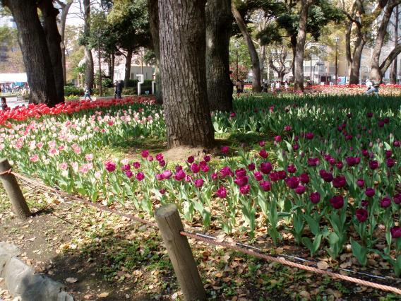 Tulips20140408 (19)