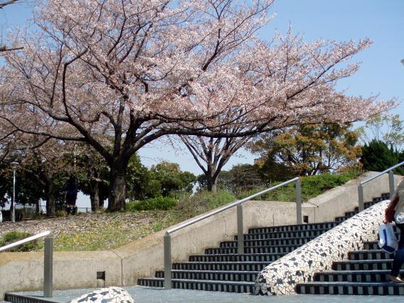 山下公園桜