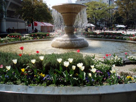 Tulips20140408 (21)