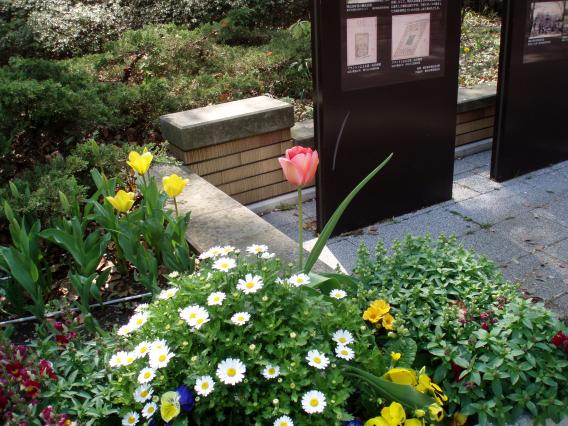 Tulips20140408 (23)