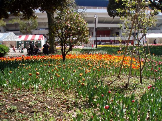 Tulips20140408 (24)