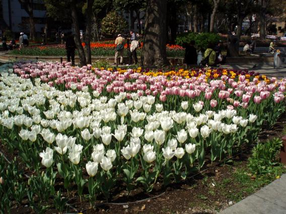 Tulips20140408 (34)