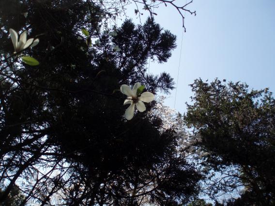 三保市民の森 こぶし