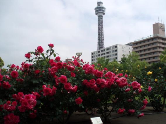 山下公園バラとマリンタワー