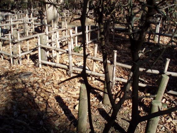 東高根森林公園201501 山椒