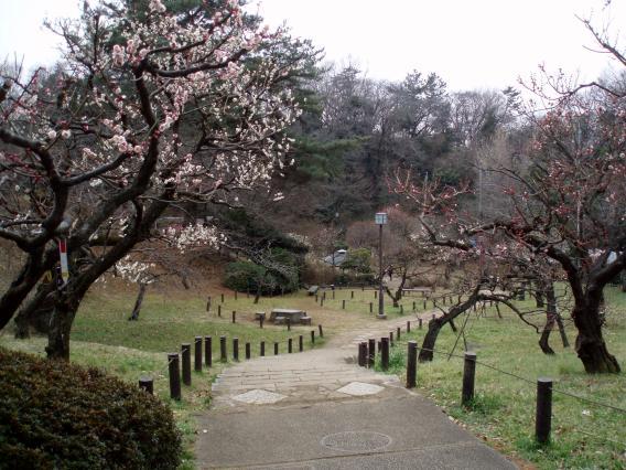 大倉山公園梅林20150217 (23)
