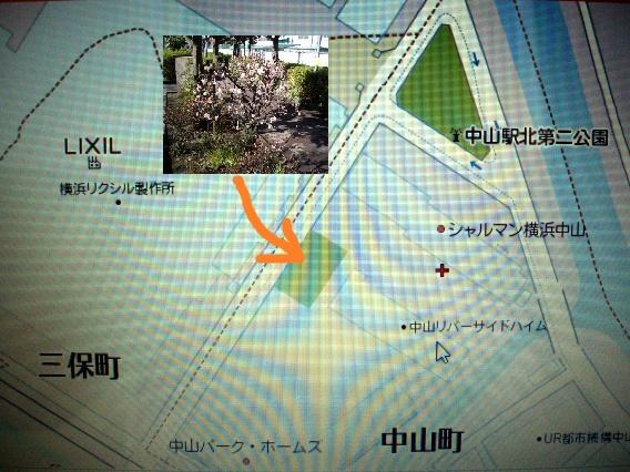 三保町リクシルさん近くの桜のある公園