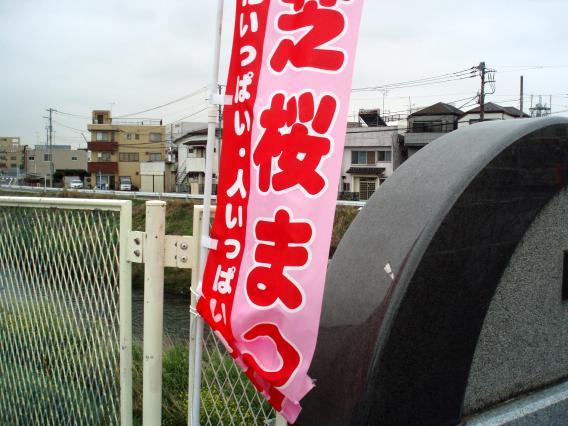 芝桜中山大橋20150421 (2)