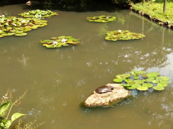 薬師池公園20150623 (37)