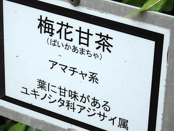 薬師池公園睡蓮蓮20170712 (8)