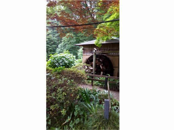 薬師池公園20150623 (3)-2