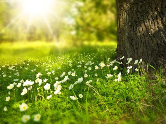 森林浴と太陽光