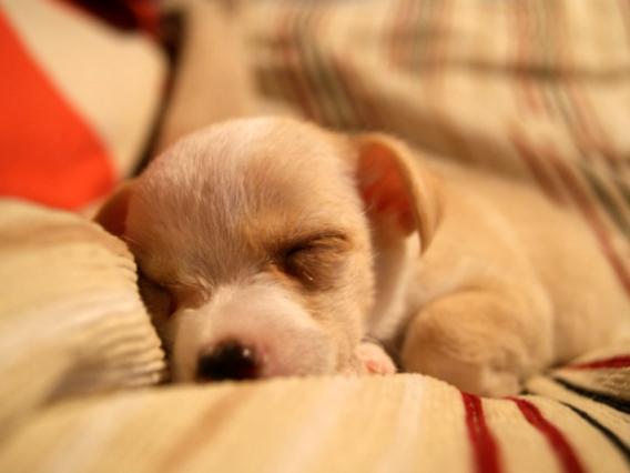 sleep0002