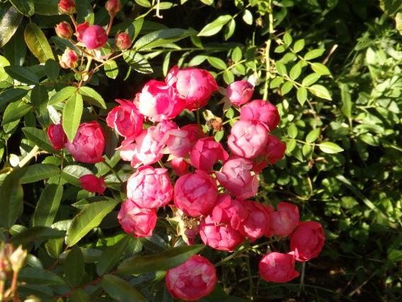 イングリッシュガーデンバラ