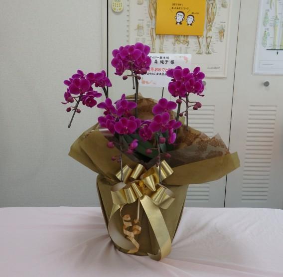 10周年お祝い胡蝶蘭