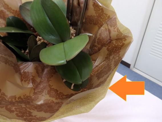 10周年お祝い胡蝶蘭包み