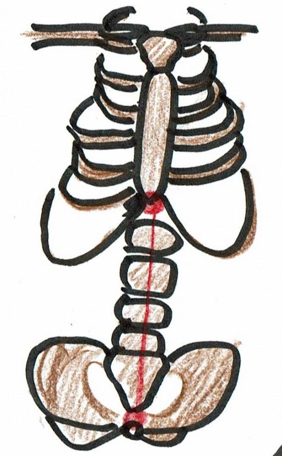姿勢-肋骨