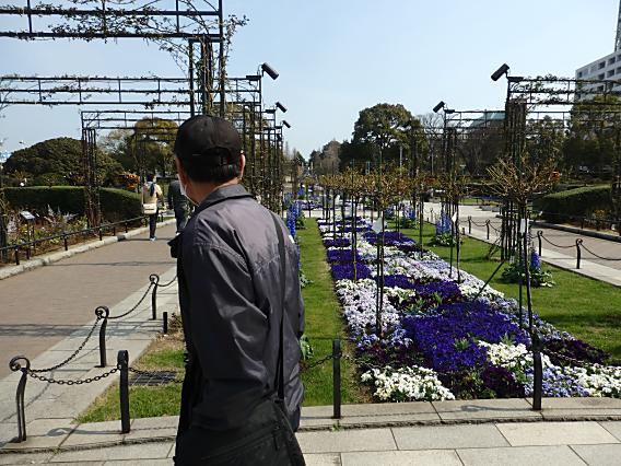 横浜公園山下公園20170320 (29)