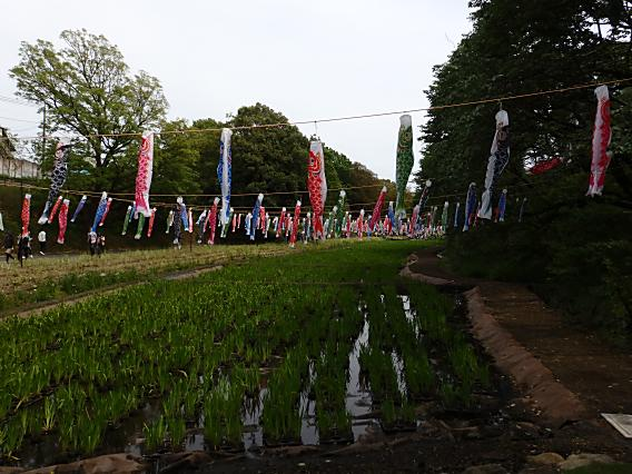 里山ガーデン20170503 (28)