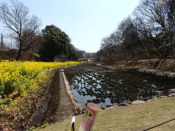 里山ガーデン20170318 (53)