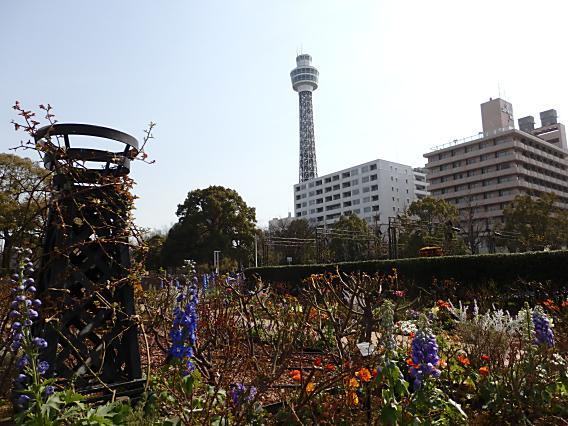 横浜公園山下公園20170320 (37)