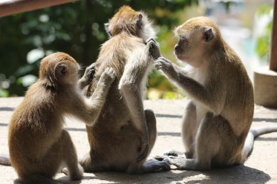 monkeys0001