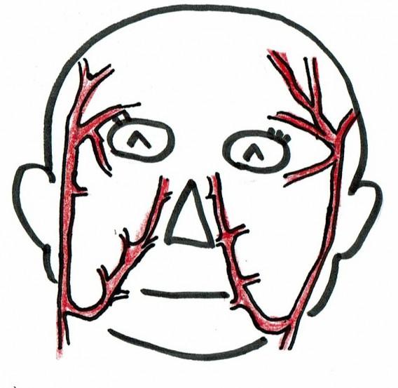 顔面血管002