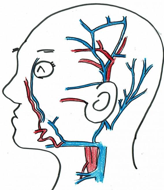 顔面血管001