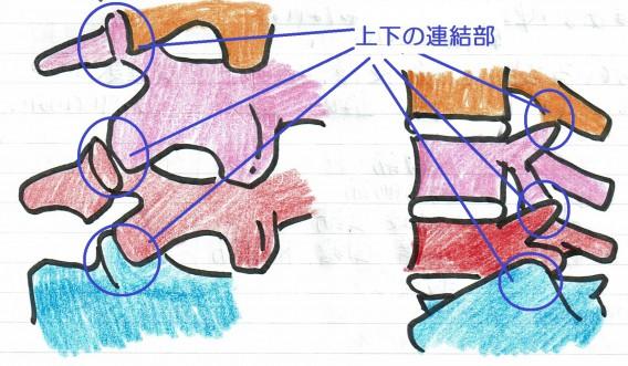 腰椎図連結部まる