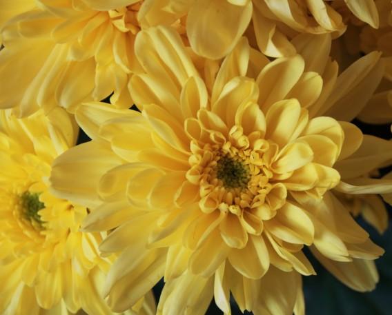 flower-1821384_1920