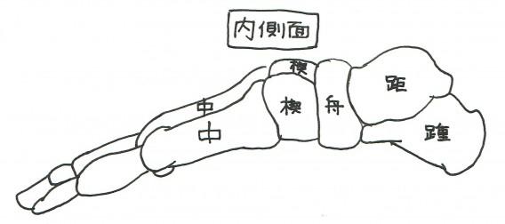 足骨内側面