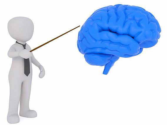 brain0005
