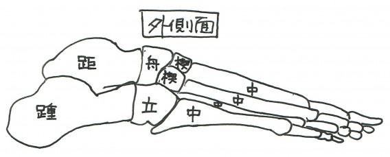 足骨外側面