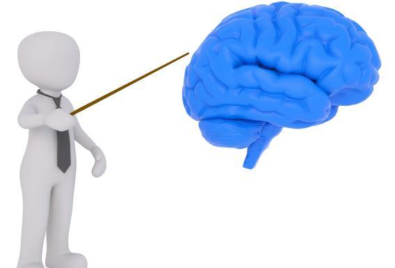 brain0001