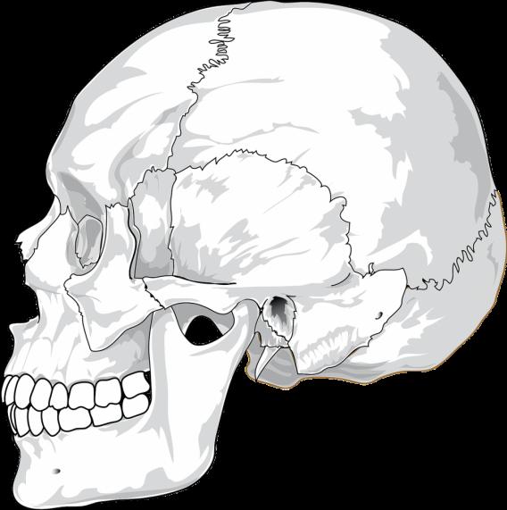 head0002-1018x1024
