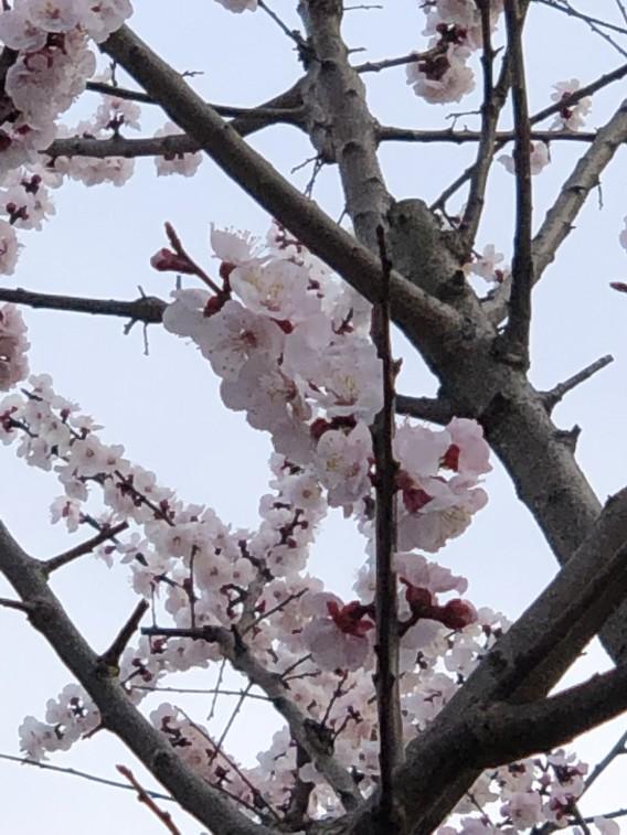 桜・十日市場市営住宅エリア