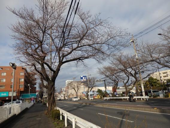 環状4号桜20190325朝の (19)