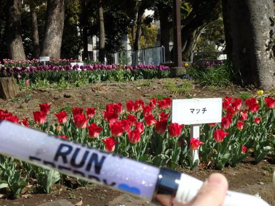 横浜公園チューリップ20190409 (50)