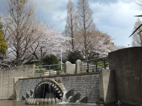 横浜公園チューリップ20190402 (121)