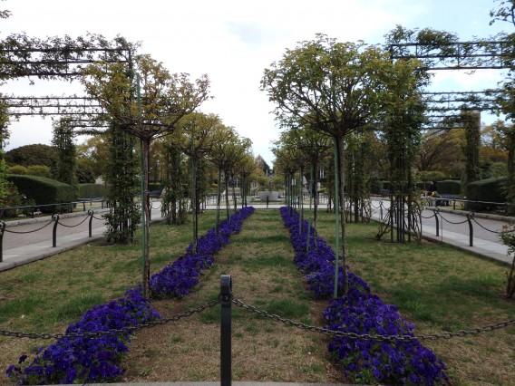 横浜公園チューリップ20190402 (114)